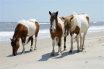 Assateague Island National Seashore Free Entry Image