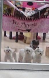 Pet Threadz