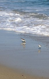 Assateague Coastal Trust