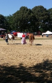 WinterPlace Park & Equestrian Center