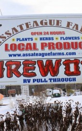 Assateague Farm