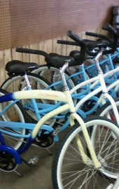 Dandy Don's Bike Rentals & Service