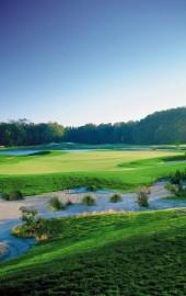 Golf Buzzy