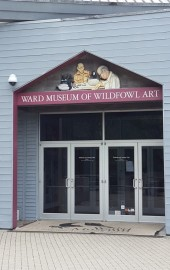 The Ward Museum of Wildfowl Art